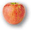 Honeycrisp photo